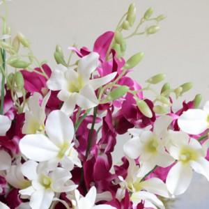 شیوه پرورش گل ارکیده در منزل