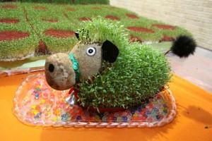 معرفی بذرهای سبزه هفت سین و زمان کاشت هر کدام