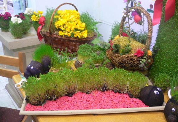 Planting-grass-Nowruz-4