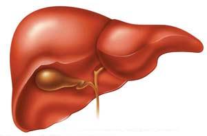 بیماری کبد چرب چیست ؟ علائم پیشگیری و درمان