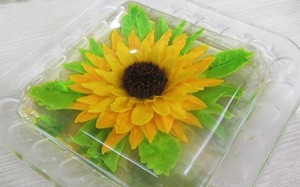 injectable-gel-sunflower-e6